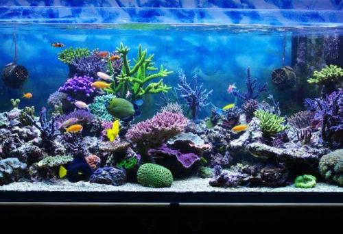 [Top 200] Aquarium Fish Pick Up Lines 1