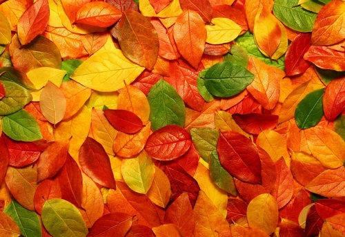 [Top 50] Autumn Season Pick Up Lines