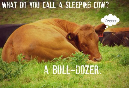 Top 50] Cow Puns To Make Your Day Mooo! - All Pick Up Lines