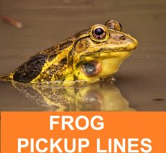 [Top 50] Frog Pick Up Lines! 1