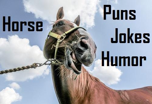 [Top 35] Horse Humor,Puns,Jokes That'll Make You Neigh! 2