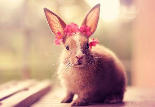 rabbit-bunny