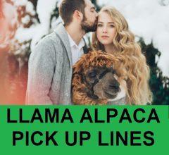 alpaca pick up lines