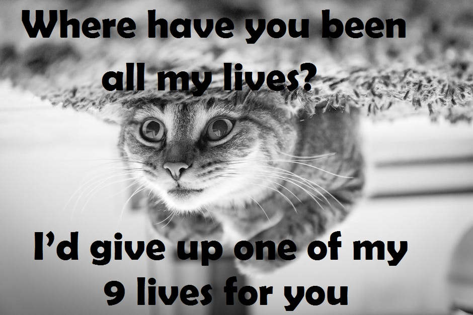 [Top 40+] Cat, Kitty Puns And Pick Up Lines- To Make You Meaow! 2