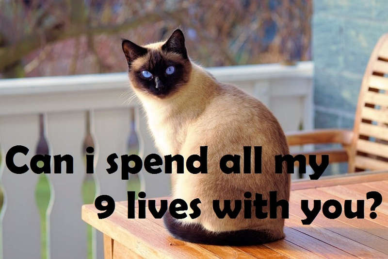 [Top 40+] Cat, Kitty Puns And Pick Up Lines- To Make You Meaow! 3