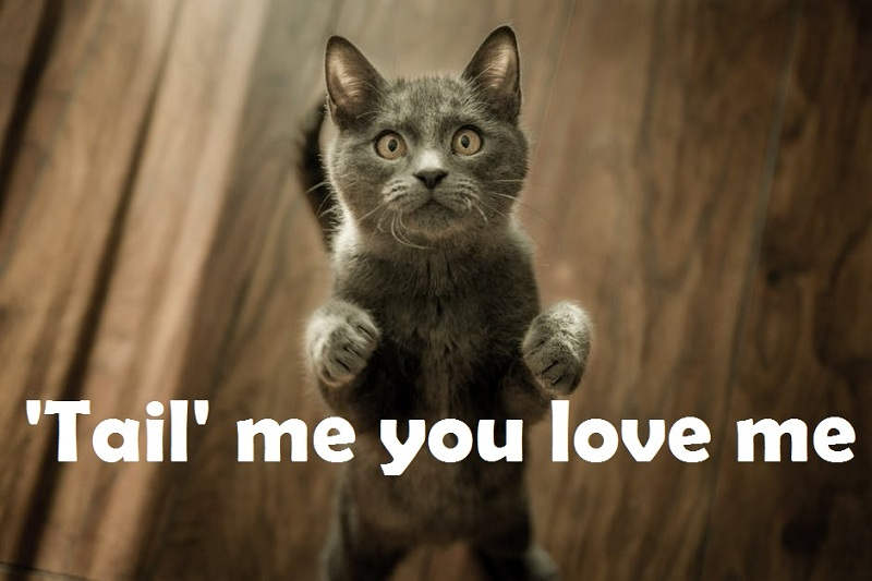 [Top 40+] Cat, Kitty Puns And Pick Up Lines- To Make You Meaow! 5