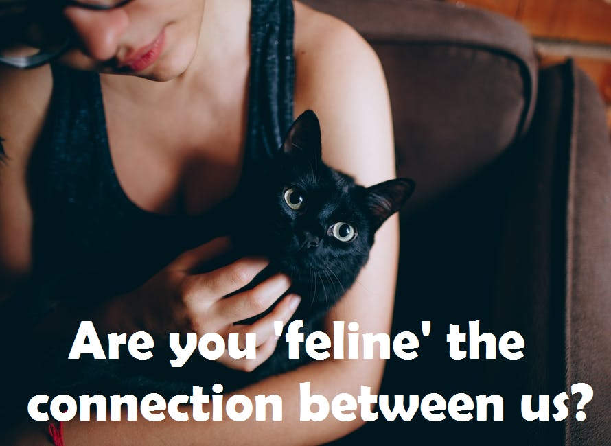 [Top 40+] Cat, Kitty Puns And Pick Up Lines- To Make You Meaow! 6