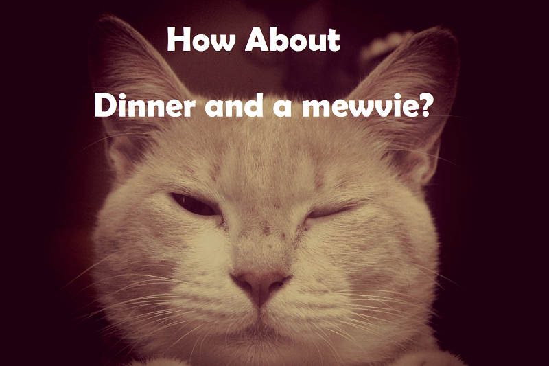 [Top 40+] Cat, Kitty Puns And Pick Up Lines- To Make You Meaow! 7