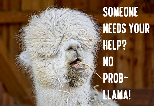 [Top 80+] Llama Alpaca Pick Up Lines,Puns,Jokes To Use On Hilly People! 2