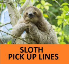 [TOP 25] Sloth Pick Up Lines. 1