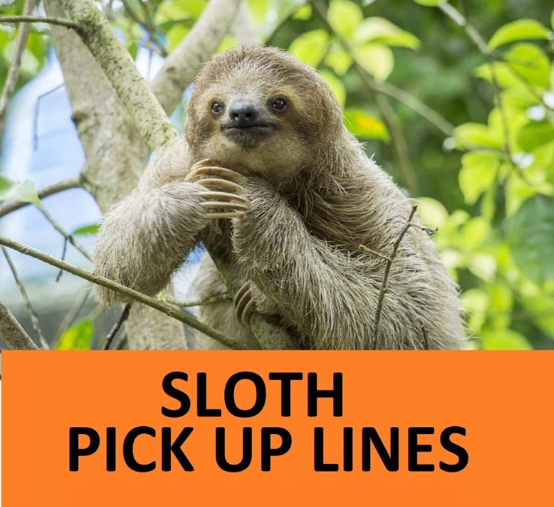 Top 25 Sloth Pick Up Lines. 1