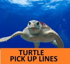 Turtle Pick Up Lines